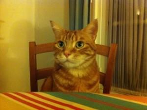 我が家には猫が居ます♪